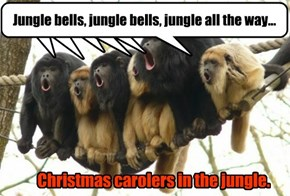 Christmas carolers in the jungle.