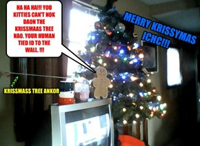 HA HA HA!!! YOU KITTIES CAN'T NOK DAON THE KRISSMAAS TREE NAO. YOUR HUMAN TIED ID TO THE  WALL. !!!