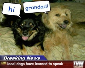 Breaking News - local dogs have learned to speak