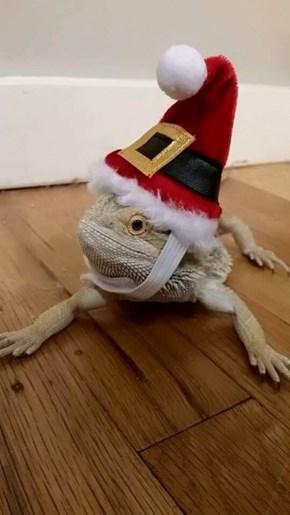 Lizard Santa With Own Beard