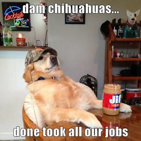 dam chihuahuas...   done took all our jobs