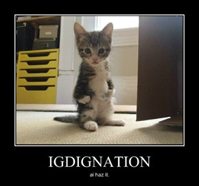 IGDIGNATION