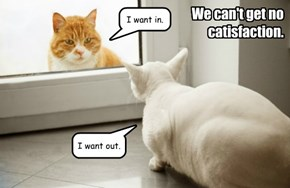 We can't get no catisfaction.