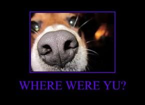 WHERE WERE YU?