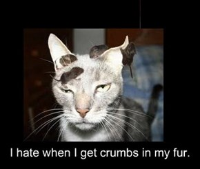 I hate when I get crumbs in my fur.