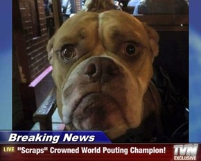 "Breaking News - ""Scraps"" Crowned World Pouting Champion!"