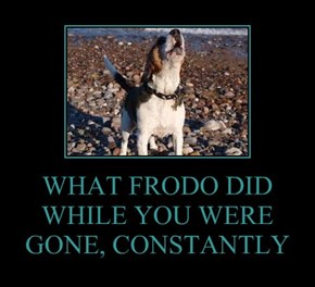 WHAT FRODO DID WHILE YOU WERE GONE, CONSTANTLY