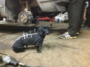 What A Helpful Little Pup!