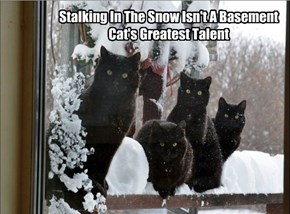 Poor Basement Cats