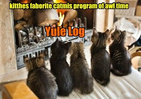 kitthes faborite catmis program of awl time