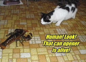 Human! Look!  That can opener is alive!
