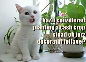 haz u conzidered                                               planting a cash crop                                                         stead ob juzz                                                                        decoratiff foilage?
