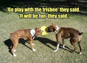'Go play with the frisbee' they said. 'It will be fun' they said.