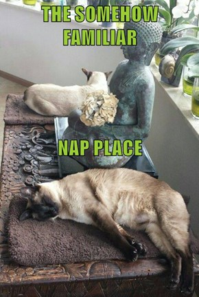 THE SOMEHOW FAMILIAR NAP PLACE
