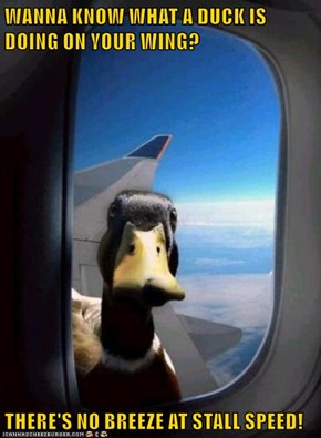 WANNA KNOW WHAT A DUCK IS DOING ON YOUR WING?  THERE'S NO BREEZE AT STALL SPEED!