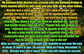 icguy34's most wonderful kittie Blackie passed over the Rainbow Bridge on 12/11/2015 at about 16 years old.. He liked head bonks and loved bellie & chest rubs! And if he smelled some food he liked, he always wanted his share!