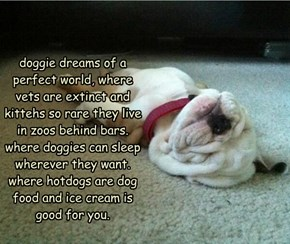 doggie dreams of a perfect world, where vets are extinct and kittehs so rare they live in zoos behind bars. where doggies can sleep wherever they want. where hotdogs are dog food and ice cream is good for you.