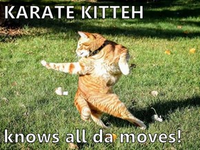 KARATE KITTEH  knows all da moves!
