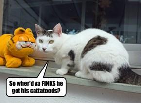 I like to share my cattatoods!