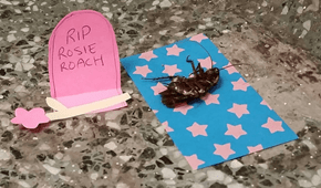 A Dead Cockroach Got the Shrine It Deserved (From College Students, in the Middle of a Hallway)