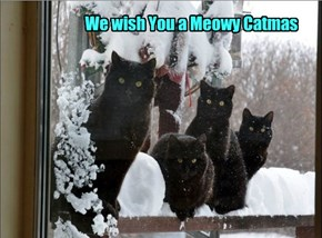 Kitteh Carolers Will Now Serenade You