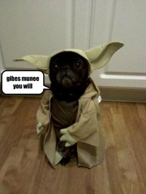 skolar Pugsly does a dead on impresshun of Yoda fur da telethon