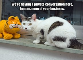 We're having a private conversation here, human, none of your business.