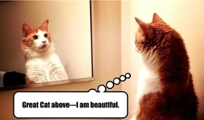 Great Cat above---I am beautiful.