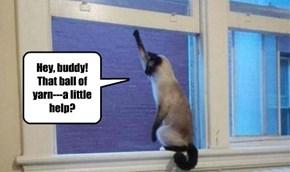 Hey, buddy! That ball of yarn---a little help?