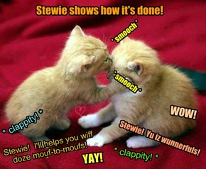 "Stewie Bellbottoms offered up an ""educashunal"" purrformance ob CPR mouf-to-moufs dat were bery well recieved an' brought many ""oohs"" and ""ahs"" from teh Telethon audience! Also, many gurl kitties bolunteered to help Stewie!"