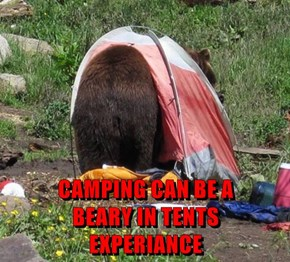 CAMPING CAN BE A                            BEARY IN TENTS                                 EXPERIANCE
