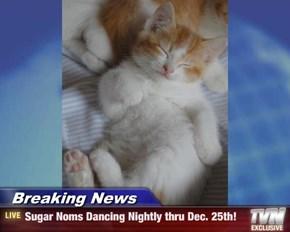 Breaking News - Sugar Noms Dancing Nightly thru Dec. 25th!