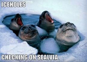 ICEHOLES  CHECKING ON SEALVIA
