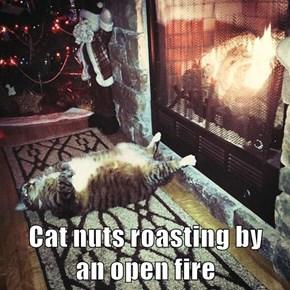 Cat nuts roasting by                       an open fire