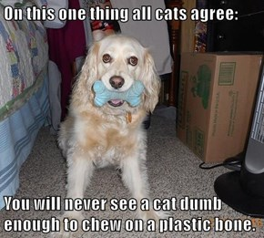 On this one thing all cats agree:  You will never see a cat dumb enough to chew on a plastic bone.