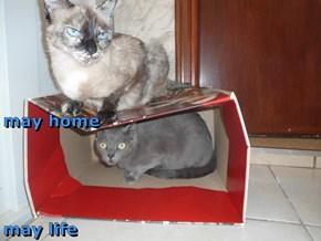 may home  may life