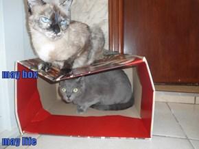 may box may life