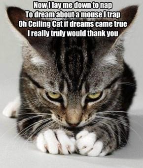 A Cat's Purrrayer
