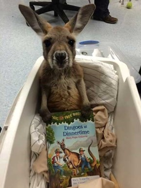 Can You Read Me A Bedtime Story Please?