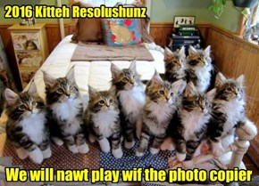 2016 Kitteh Resolushunz