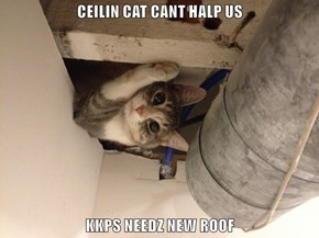 CEILIN CAT CANT HALP US  KKPS NEEDZ NEW ROOF