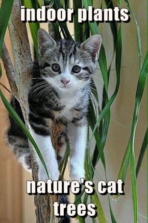indoor plants   nature's cat trees