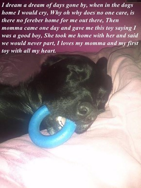 I dream a dream of days gone by, when in the dogs home I would cry, Why oh why does no one care, is there no fereber home for me out there, Then momma came one day and gave me this toy saying I was a good boy, She took me home with her and said we would n