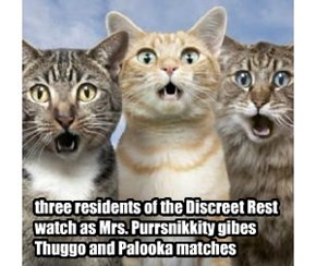 three residents of the Discreet Rest watch as Mrs. Purrsnikkity gibes Thuggo and Palooka matches