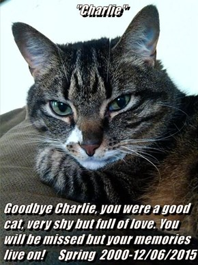 """Charlie""                Goodbye Charlie, you were a good cat, very shy but full of love. You will be missed but your memories live on!      Spring  2000-12/06/2015"