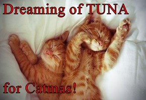 Dreaming of TUNA  for Catmas!