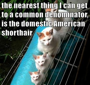 the nearest thing I can get to a common denominator, is the domestic American shorthair