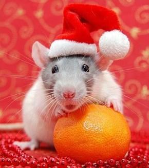 Two Little Christmas Treats