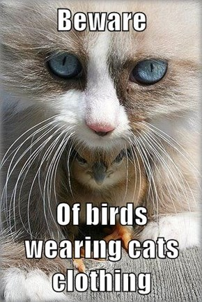 Beware  Of birds wearing cats clothing