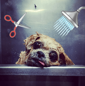 Your Instagram Feed Deserves These Perfectly Groomed Dogs in Slow Motion